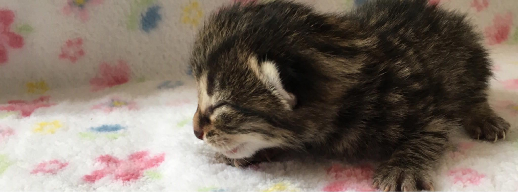 Zubehör für die Pflege von Katzenbabys
