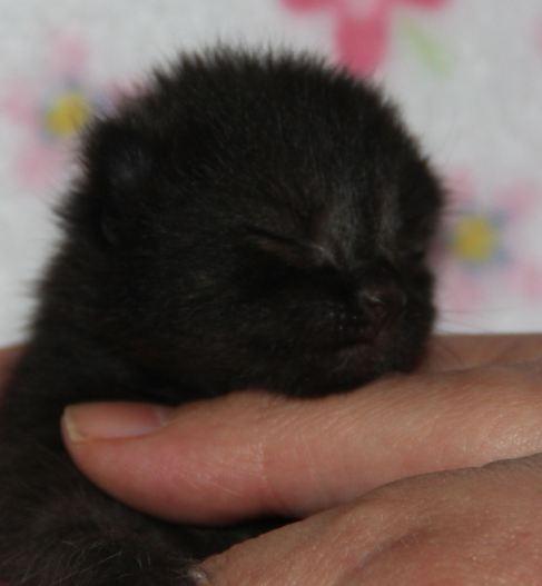 Babykatze zu vermitteln, Kiwi, männlich