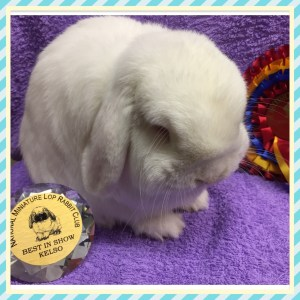 National Mini Lop Best in Show