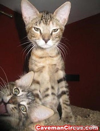 10_greatest_animal_photobombs_of_all_time_2