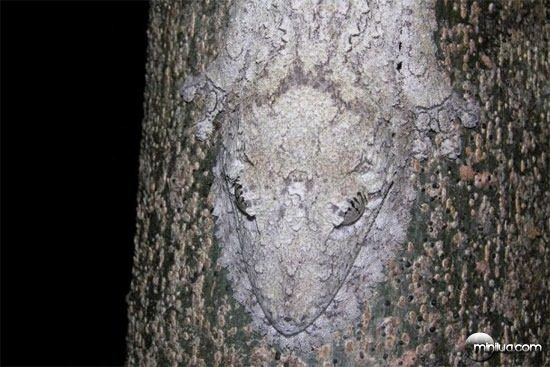 reptile-tree