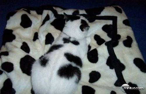 camuflagem-do-gato-44611