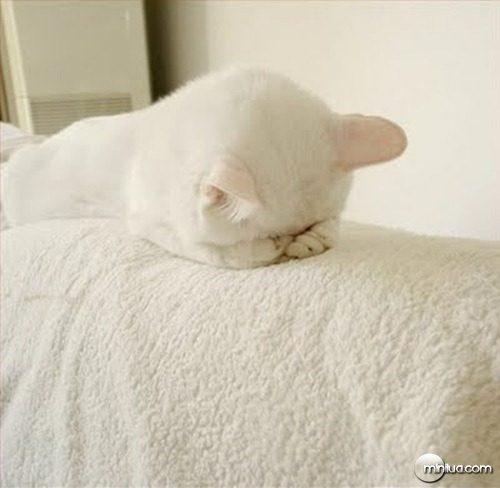 gato-camuflado