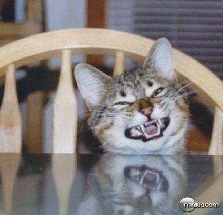 risada-gato