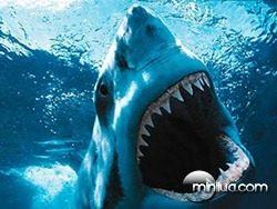 tubarão-8