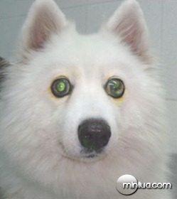 cao-com-glaucoma