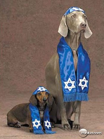 HS_Dog_Shalom_Pet_Costume