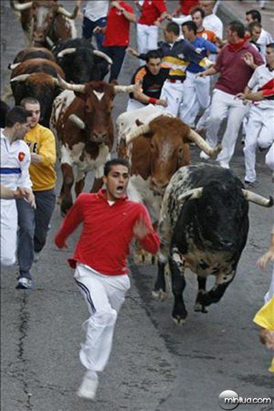 oh-bull