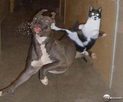 oh-cat
