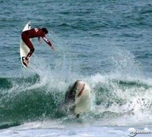 oh-shark