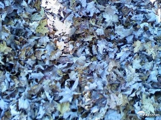 the-leaves-36152