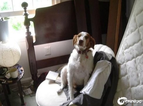 dog-on-chair-69691