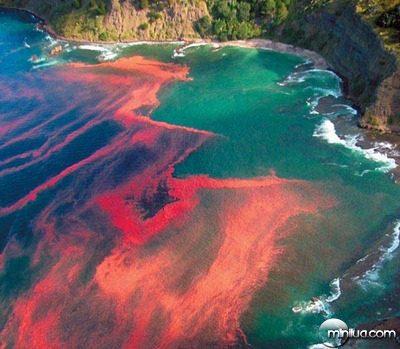 fenômeno-maré-vermelha-Florida
