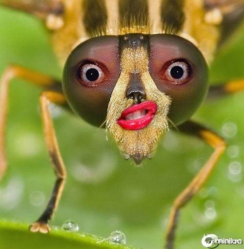 Female-Bug--21595
