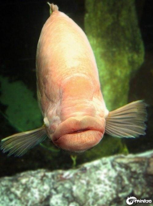 Fish-Jagger--21577