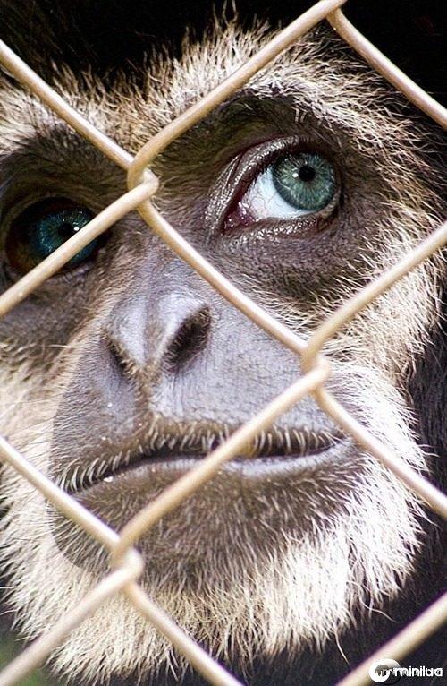 monkey--21624