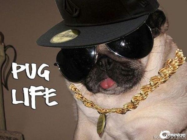gangster_pugs_640_03