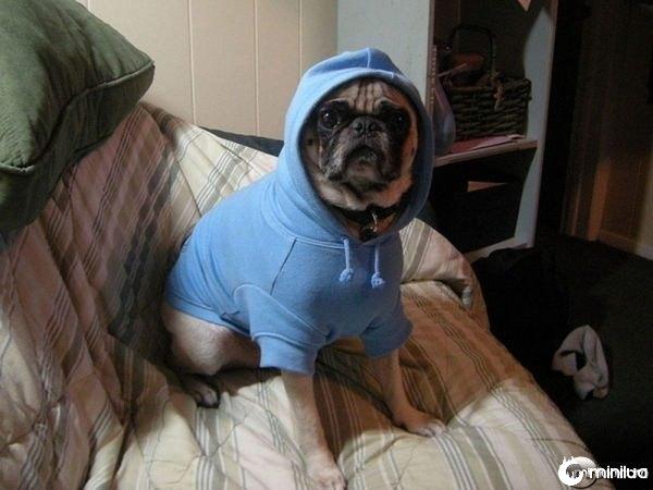 gangster_pugs_640_05