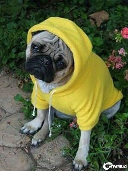 gangster_pugs_640_14