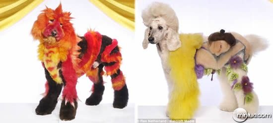 Dogs_dressed_up_2