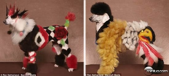 Dogs_dressed_up_4