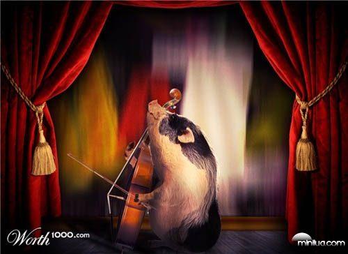 pig_cellist