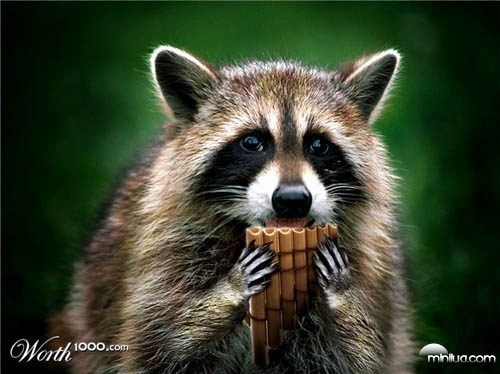 racoon_flute