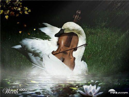 swan_player