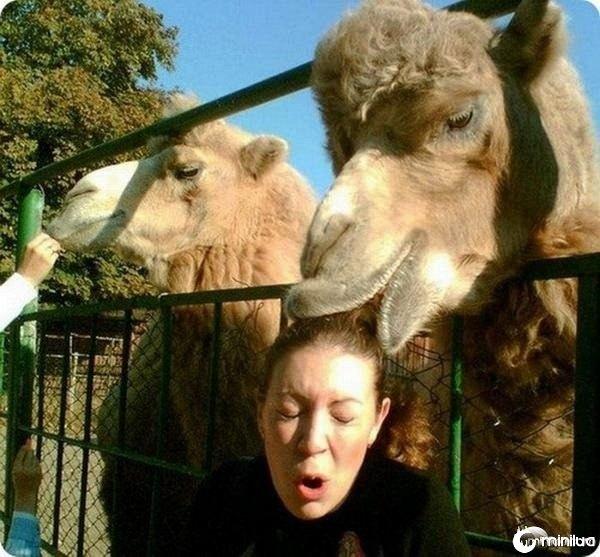Camel-surprise_mini