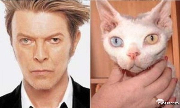 celebrity-cats-16
