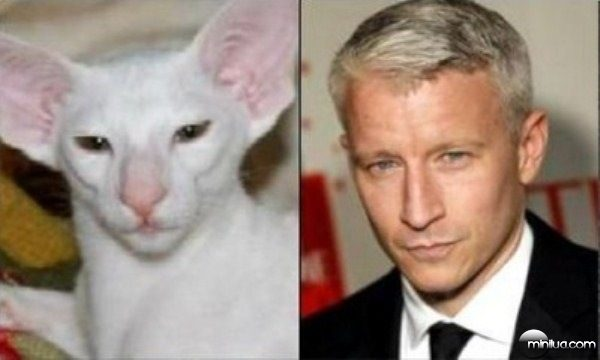celebrity-cats-3