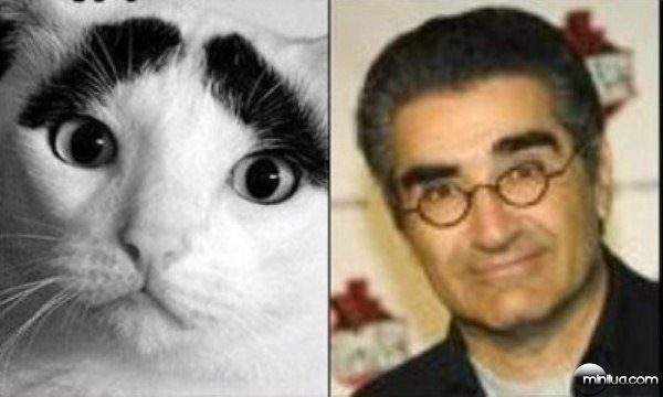 celebrity-cats-5