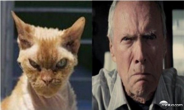 celebrity-cats-7