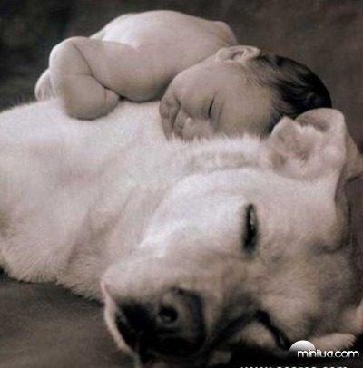 cão e miudo 5
