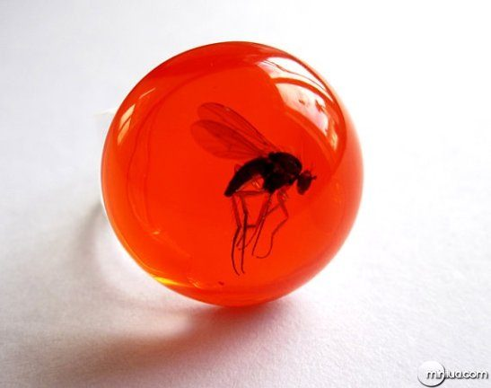 mosquito_red