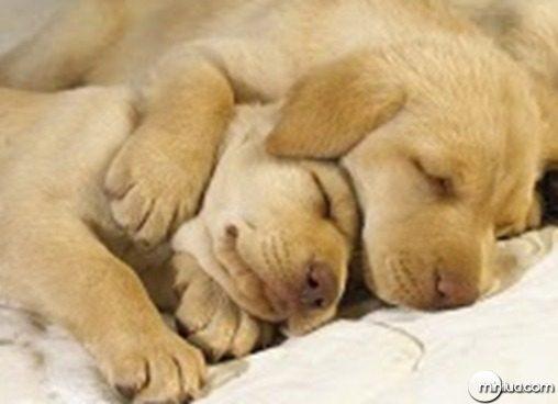cachorrinhos-dormindo-na-cama-f90d8