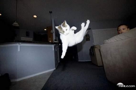 cats10