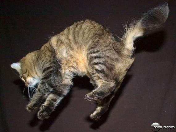 cats21