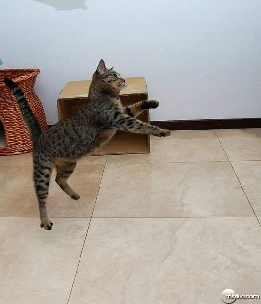 cats25