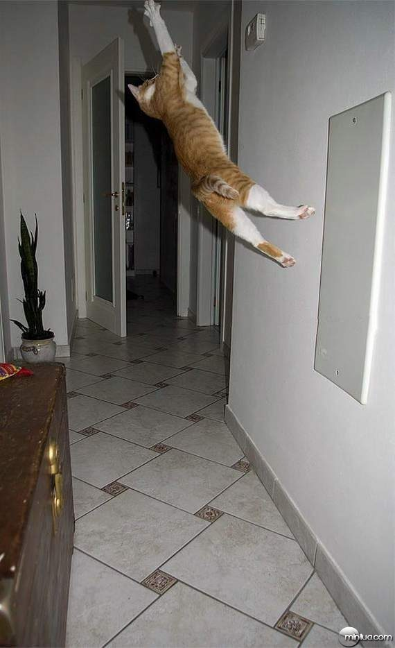 cats26