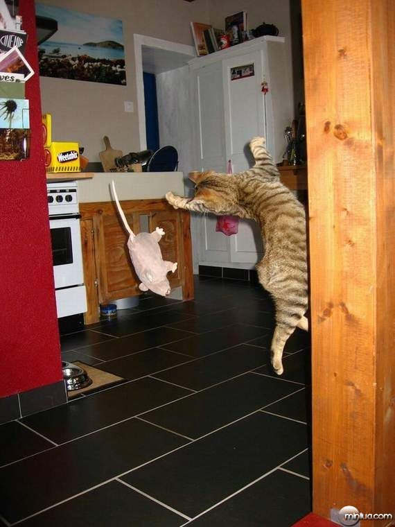 cats31