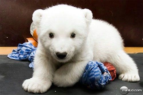 cute-polar-bear-cub02