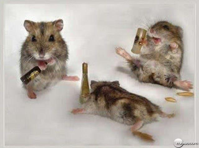 animal bêbado (14)