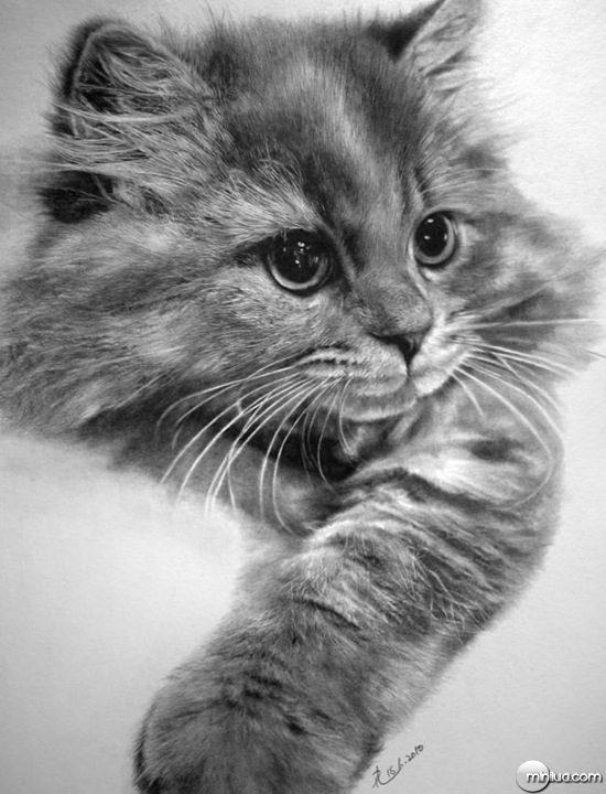 cat-drawings-03