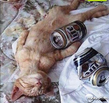 gato_bebado
