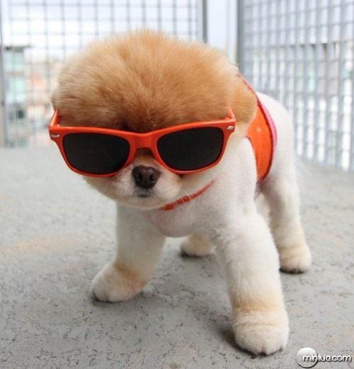 cute-dog-boo-e1302122405535