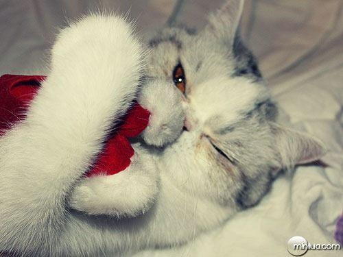 gatos-natal0021