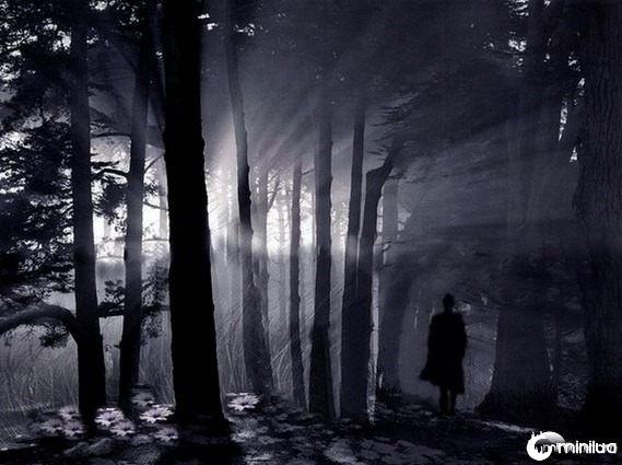 Floresta escura