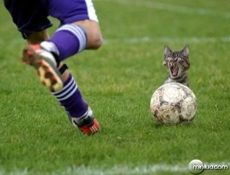 a98100_cat_12-sports