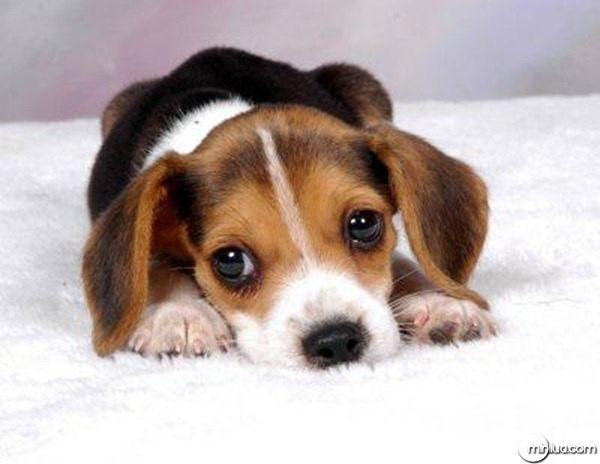 filhote-de-cachorro-fofo